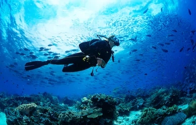 Scuba diving in Goa. A man is diving in a deep blue sea with aquatic animals.