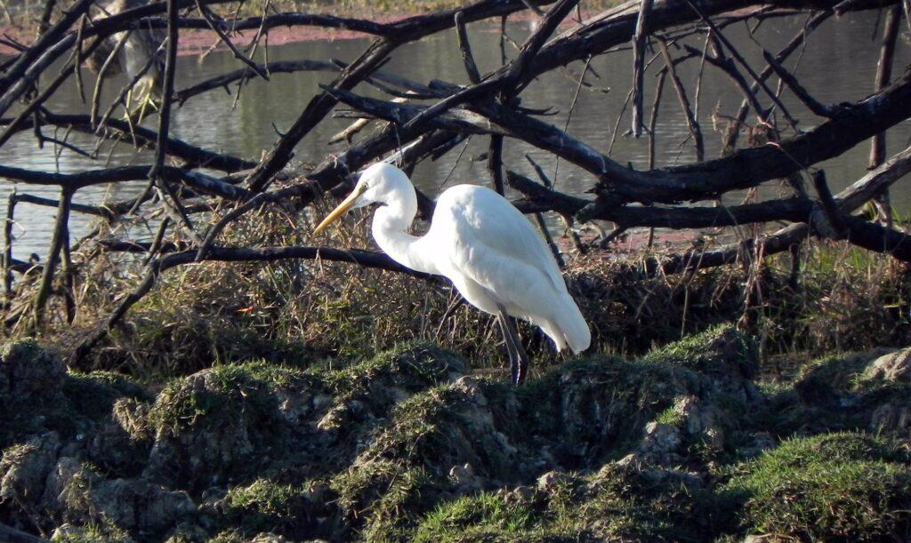 Bharatpur Bird Sanctuary of Rajasthan