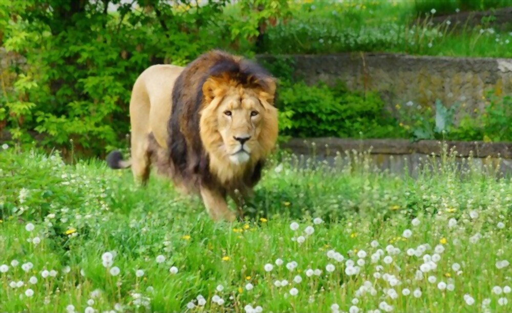 Gir National Park is top must visit place in Gujarat