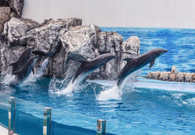 Bangkok Places. Idea destination in Bangkok for ocean animals lovers