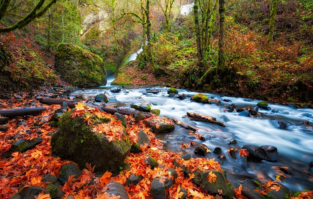 Hiking and trailing in area of River Gorge is one of the best things to do in Portland