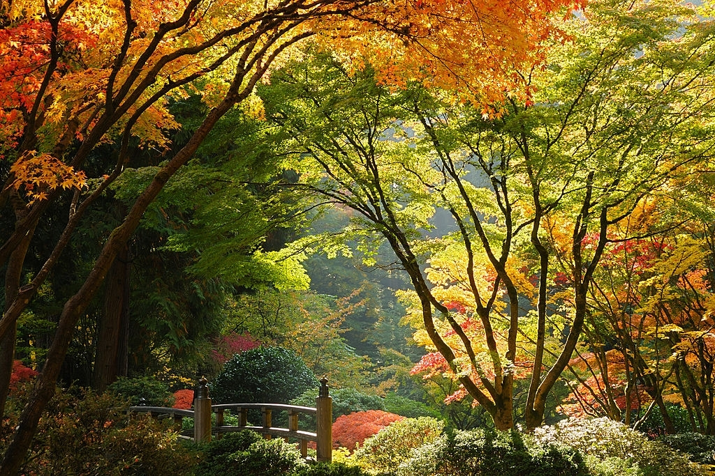 Famous Japanese Garden of Portland which offers endless fun activities to do in Portland for Culture lovers.